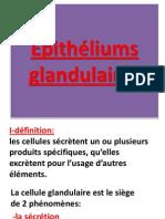 2 Copie de _pith_TJREliums Glandulaires