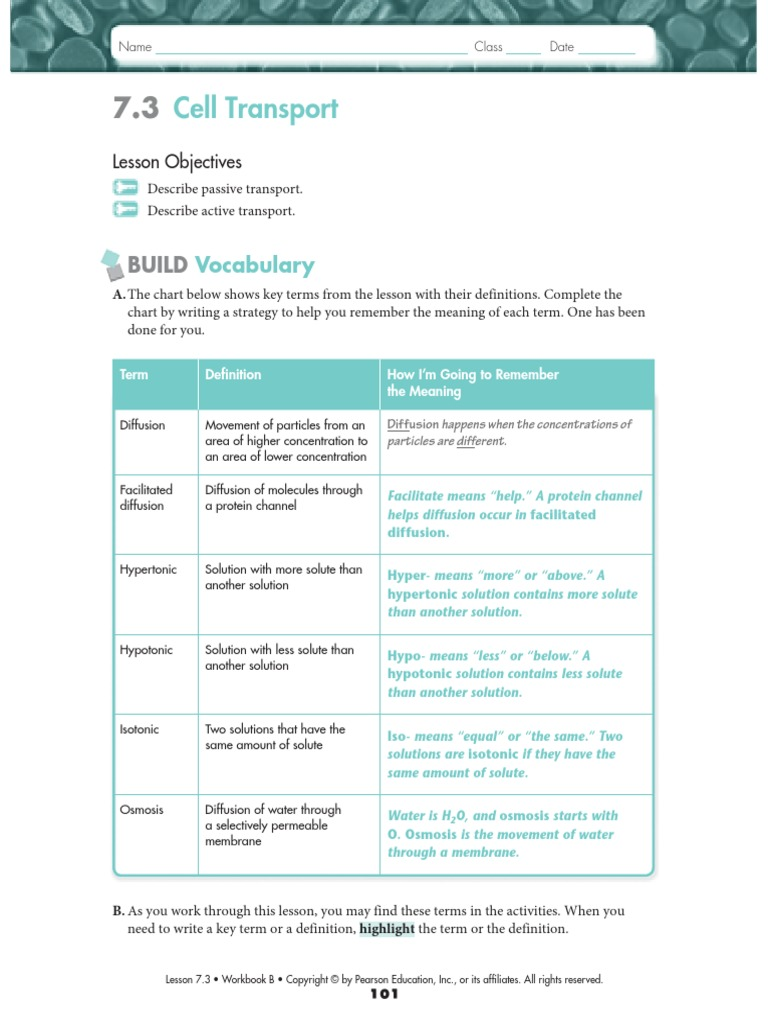Biology 7.3 and 7.4 WS KEY