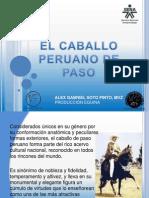 Exposición Caballo Peruano de Paso