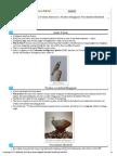 [Biodiversity] Amur Falcon Massacre, Nicobar Megapod, Narcondam Hornbill « Mrunal