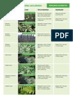 Tabela Tratar Plantas Com Plantas