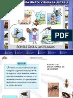 Presentacion APSR Vectores y Zoonosis Sept 2009