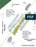 photosynthesis v respiration  foldable