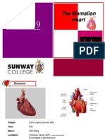 Mammalian Heart(2)