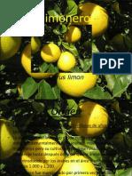 el-limonero-1203669604873636-2 (1).ppt