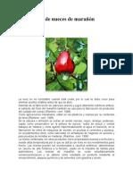 Producción de nueces de marañón.doc
