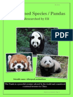 Threatened Species Pandas