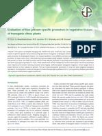 Promotor Vegetative Tissues