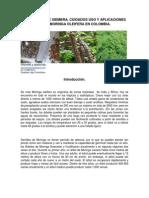 Moringa oleifera - siembra y cuidados