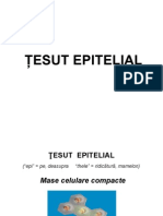 Curs Tesut Epitelial Studenti (2014)