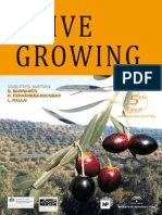 Olive Growing