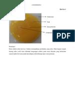 Embrio Ayam Hari Ke-1