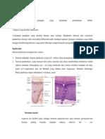 Anatomi Histo Fisio Kulit