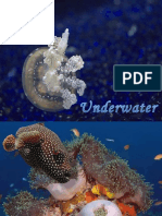 [Sharing] Underwater Animals