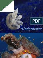 [Sharing] Underwater Animals