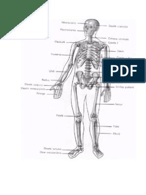 edem al ligamentului cruciat anterior al articulației genunchiului