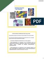 Principales grupos bacterianos