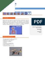Como Funciona o Sistema Respiratorio