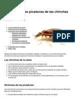 Sintomas de Las Picaduras de Las Chinches de Cama 4320 Li3qux