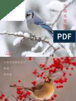 [Sharing] 生命本來沒有名字-鳥的欣賞