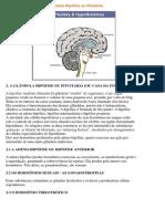 A Glândula Hipófise Ou Pituitária