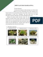 Jenis Rumput Laut Dan Manfaatnya