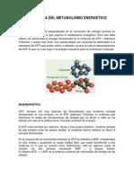 Fisiología Del Metabolismo Energetico