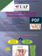 01 Histologia Del Aparato Reproductor Masculino