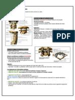 Arthrologie du dos.pdf