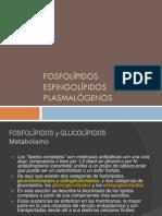 4-Fosfolipidos