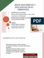 cambiosanatmicosyfisiolgicosenelembarazoexpogineco-131021105518-phpapp02