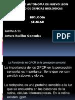 La Función de Los GPCR en La Percepción Sensorial