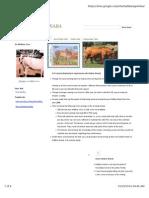 Hallikar Cows