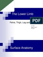 ANATOMI - IT 10 - the Skeletal of Lower Limb - IRH