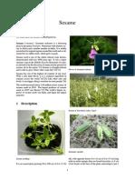 Sesame seeds.pdf