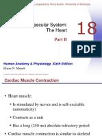 Faal Jantung B