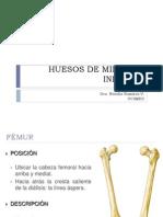 MIEMBRO INFERIOR_OSTEOLOGÍA.ppt