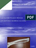 Atlas Antebrazo