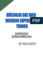 Musculo Unen Superior Al Torax