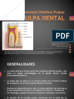 histologia dentaria pulpa dental