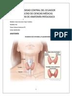 Informe Tiroides