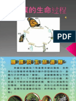 蝴蝶的生命过程