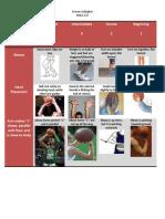 Skill Rubric for Basketball Shot