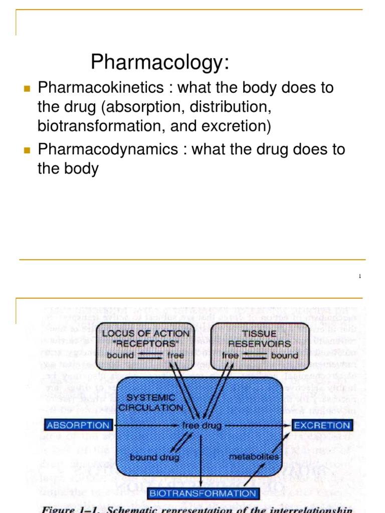 Farmakologi umum2ppt receptor antagonist drug metabolism ccuart Image collections