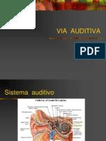 Neuro Auditiva