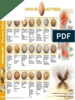 Alltech Egg Shell Quality Poster