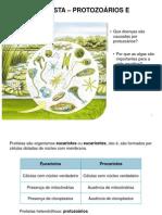 Reino Protista - Protozoários e Algas