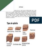 EPITELIO.docx