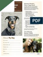 Doberman Pinschers.pdf