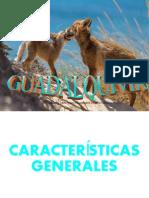 La actividad turística en el Guadallquivir